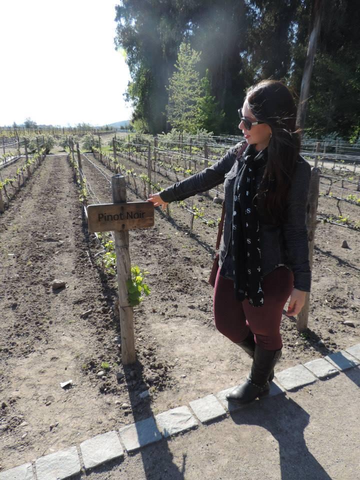 As vinhas estavam em crescimento quando fomos. Queríamos vê-las grandes.